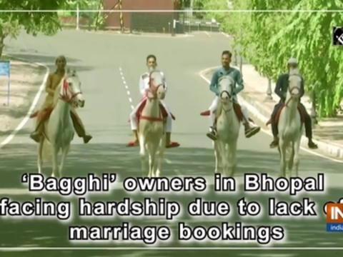 'Bagghi' owners in Bhopal facing hardship due to lack of marriage bookings
