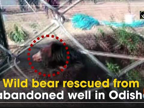 Wild bear rescued from abandoned well in Odisha