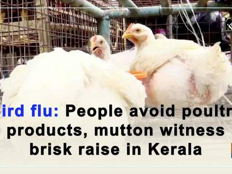 Bird flu: People avoid poultry products, mutton witness brisk raise in Kerala