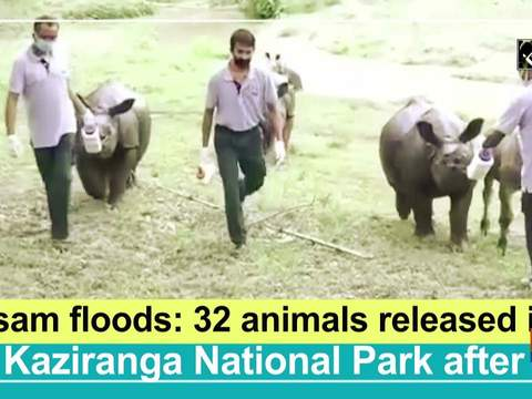 Assam floods: 32 animals released into Kaziranga National Park after treatment