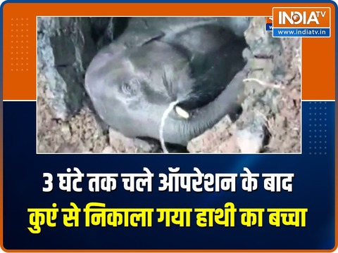 WATCH | Baby elephant's dramatic rescue from well after 3-hr-long operation