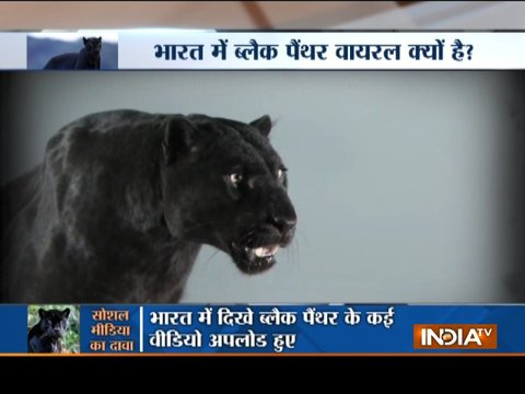 Aaj Ka Viral: Know the truth behind Black Panther in India