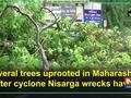 Several trees uprooted in Maharashtra after cyclone Nisarga wrecks havoc
