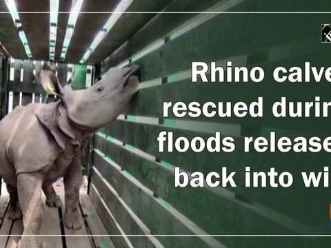 Rhino calves rescued during floods released back into wild
