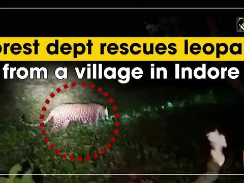 Forest dept rescues leopard from a village in Indore