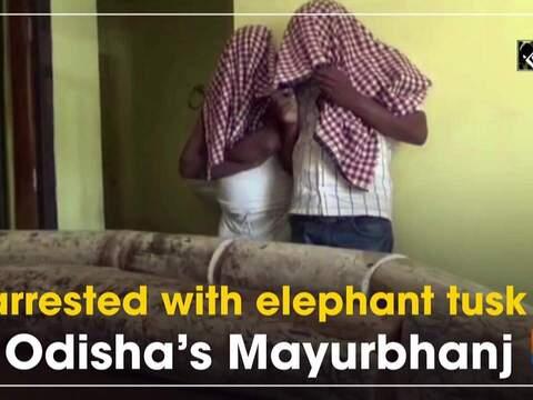 2 arrested with elephant tusk in Odisha's Mayurbhanj