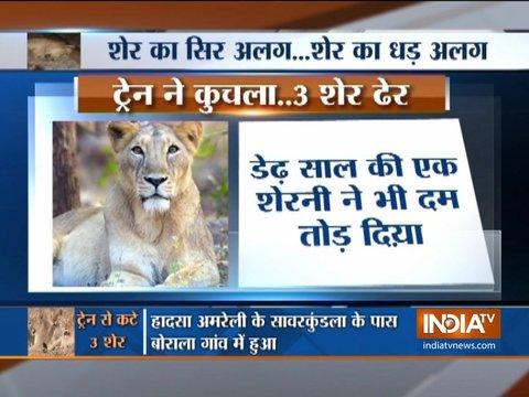 गुजरात के अमरेली में 3 शेर रेलवे ट्रैक पर आने से कटे