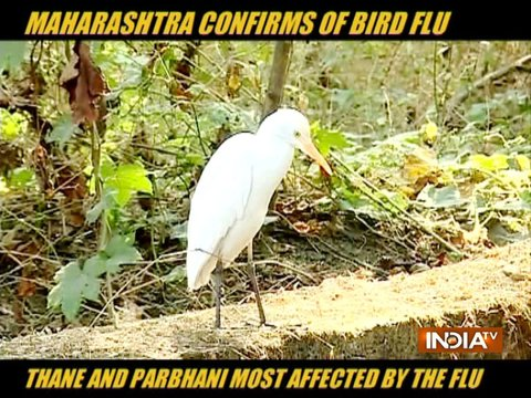 Bird Flu confirmed in Mahrashtra, CM Uddhav Thackeray to chair a meeting