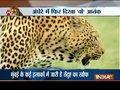 Leopard spotted in a residential area in Thane, creates panic