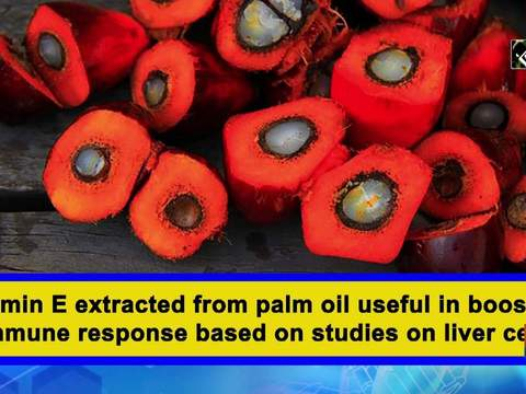 Vitamin E extracted from palm oil useful in boosting immune response based on studies on liver cells
