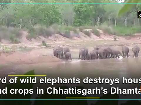 Herd of wild elephants destroys houses and crops in Chhattisgarh's Dhamtari