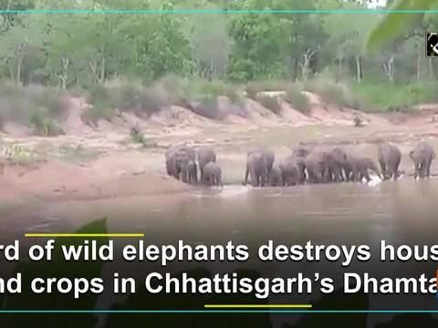 Herd of wild elephants destroys houses and crops in Chhattisgarh's Dhamtari