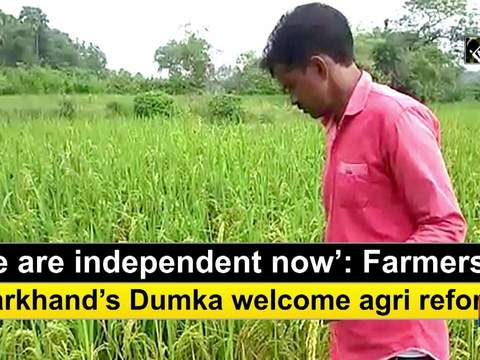 'We are independent now': Farmers in Jharkhand's Dumka welcome agri reforms