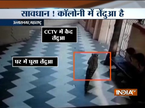 Leopard enters into a residential building in Maharashtra