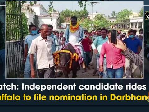 Watch: Independent candidate rides on buffalo to file nomination in Darbhanga