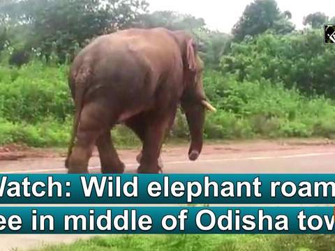 Watch: Wild elephant roams free in middle of Odisha town