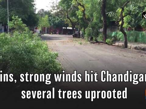 Rains, strong winds hit Chandigarh, several trees uprooted