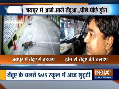 जयपुर में बीच शहर में दिखा पैंथर, मचा हड़कंप