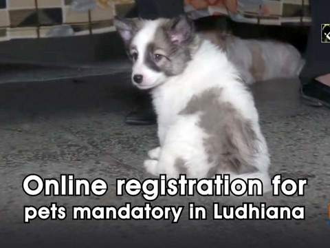 Online registration for pets mandatory in Ludhiana