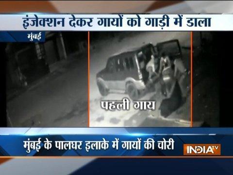 Mumbai: Cow smuggling caught on camera