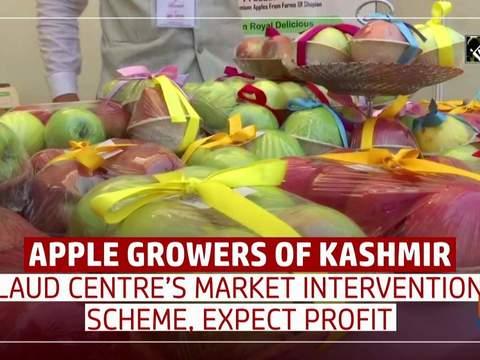 Apple growers of Kashmir laud Centre's Market Intervention Scheme, expect profit