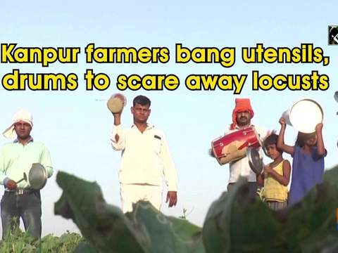 Kanpur farmers bang utensils, drums to scare away locusts
