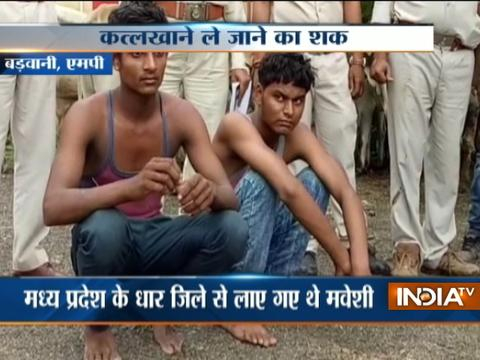 Two arrested for Illegal Cattle trafficking in MP, five escape