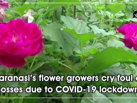 Varanasi's flower growers cry foul of losses due to COVID-19 lockdown