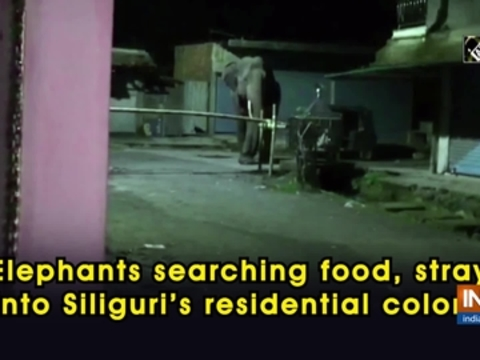 Elephants searching food, stray into Siliguri's residential colony