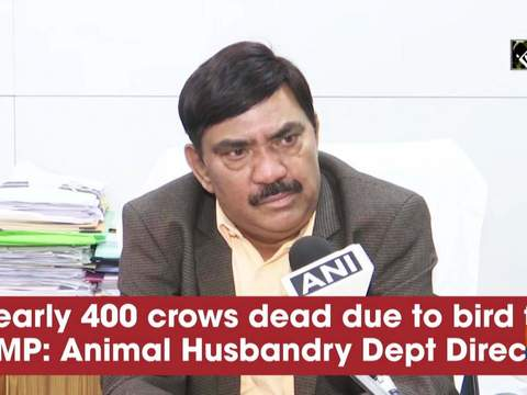 Nearly 400 crows dead due to bird flu in MP: Animal Husbandry DeptDirector