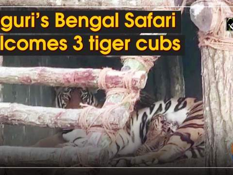 Siliguri's Bengal Safari welcomes 3 tiger cubs
