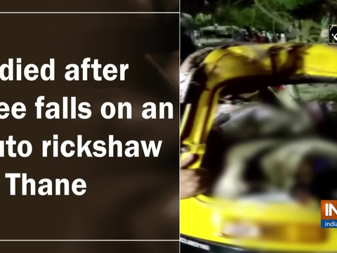 2 died after tree fell on an auto rickshaw in Thane
