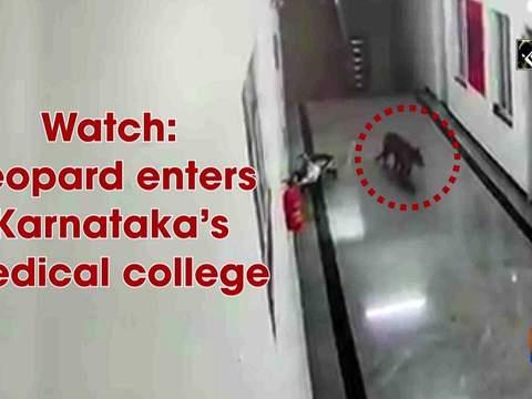 Watch: Leopard enters Karnataka's medical college
