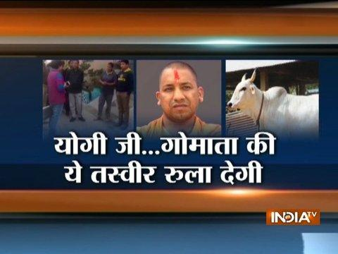 Yogi govt quick action saves life of an ill-cow after owner tweets to CM for its treatment