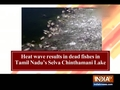 Heat wave results in dead fishes in Tamil Nadu's Selva Chinthamani Lake