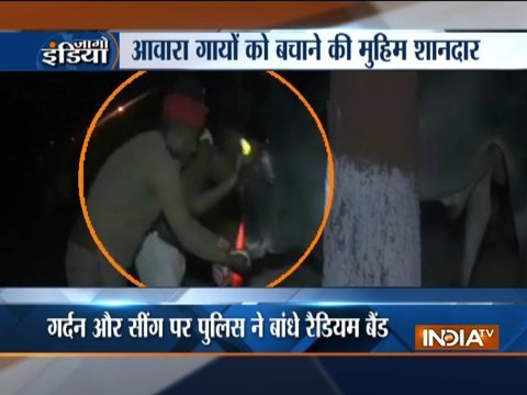 Uttar Pradesh: Police tie radium belts on stray cattle to avoid road accidents at night