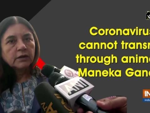Coronavirus cannot transmit through animals: Maneka Gandhi