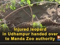 Injured leopard in Udhampur handed over to Manda Zoo authority