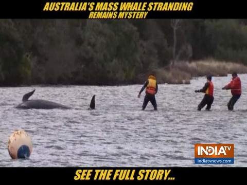 No cause for Australian Mass Whale stranding