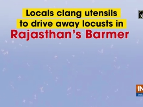 Locals clang utensils to drive away locusts in Rajasthan's Barmer