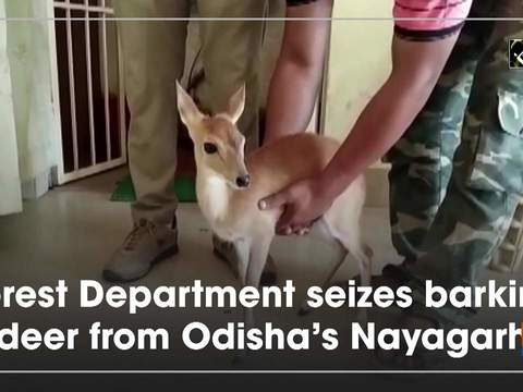 Forest Department seizes barking deer from Odisha's Nayagarh