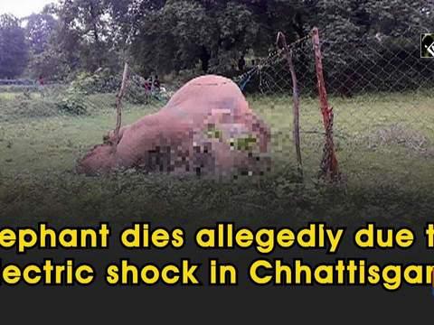 Elephant dies allegedly due to electric shock in Chhattisgarh