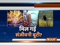 IndiaTV Special | In search of Sanjeevani Booti, the devine herb from Ramayana era