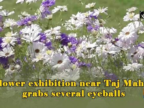 Flower exhibition near Taj Mahal grabs several eyeballs