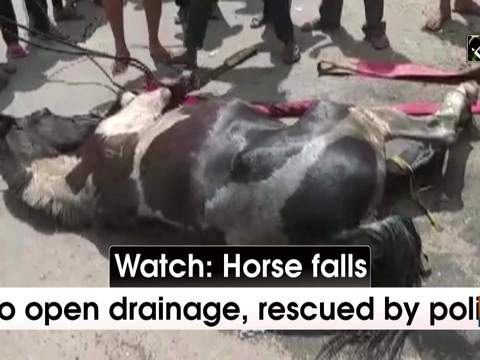 Watch: Horse falls into open drainage, rescued by police