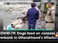 COVID-19: Dogs feed on corpses at riverbank in Uttarakhand's Uttarkashi