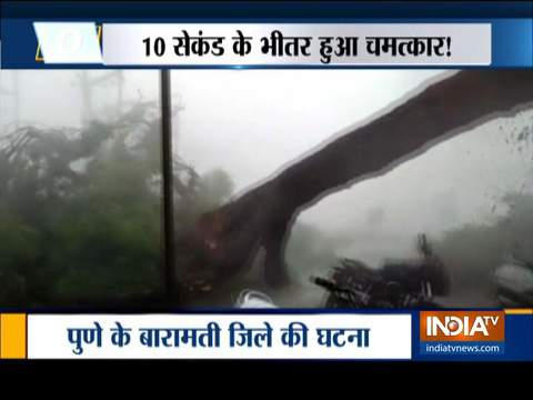 Heavy tree falls due to rain and strong wind in Baramati, Pune
