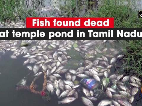 Fish found dead at temple pond in Tamil Nadu