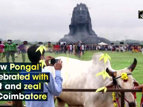 'Cow Pongal' celebrated with zest and zeal in Coimbatore