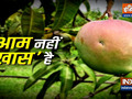 Worlds most expensive mango variety sold for Rs. 2.7 lakh